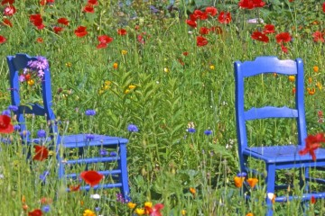 Wildflowers - Meadow Garden Ideas