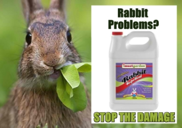 Rabbits eating your plants? Get I Must Garden Rabbit Repellent. From Amazon @12.99